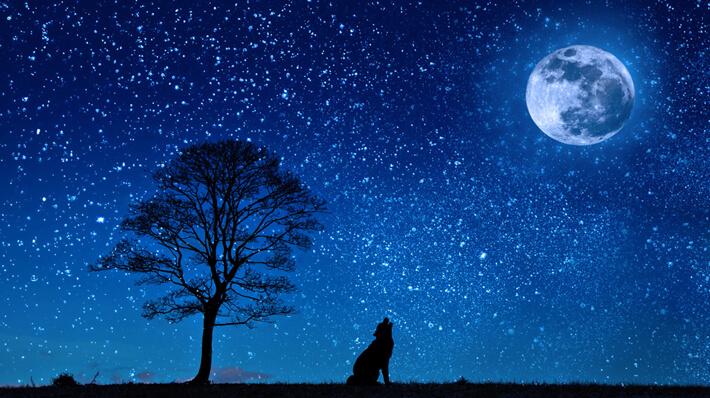 最近、じっくり月を眺めることなんてないなぁ