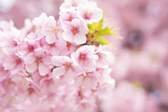 こっちはまだまだ桜咲かないよ〜